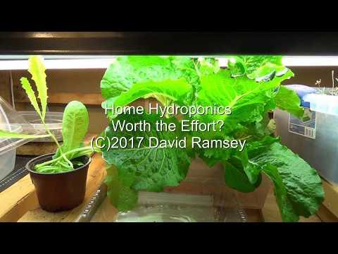 Home hydroponics - worth the effort?