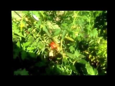 Organic hydroponics, what?!