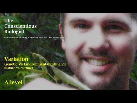 Variation: genetic vs environmental influence