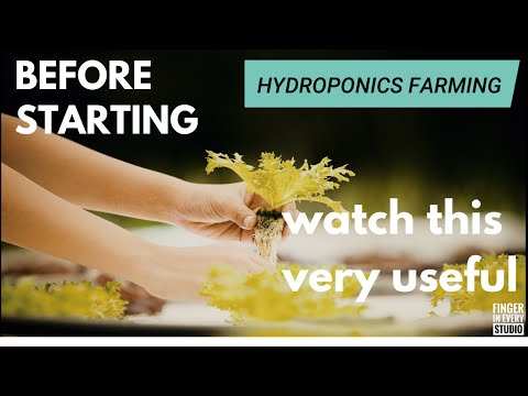 Hydroponics farming   advantages and disadvantages   watch this before starting   fie studio