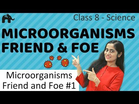 Microorganisms friend and foe #1 | class 8 science