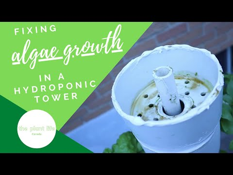 Fixing algae growth in a hydroponic tower | the plant life - canada #homemadehydroponics