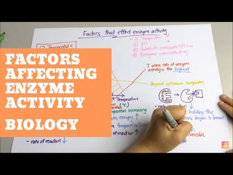 Biology- factors affecting enzyme activity