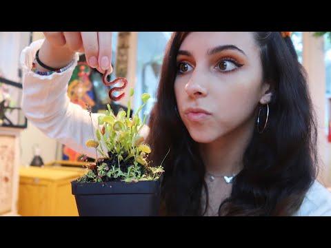 Feeding my venus flytrap plant!
