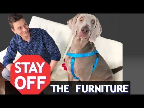 How to train your dog to stay off of the furniture! *new*