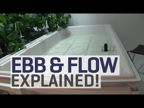Ebb and flow hydroponics explained!