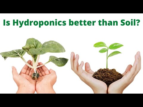 Why use hydroponics instead of soil farming? | what is hydroponics and how hydroponics work