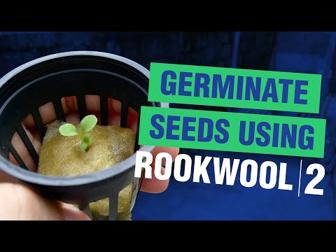 How to germinate seeds using rockwool 2 | hydroponics