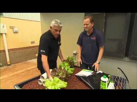 Aquaponics and sustainable gardening at bannister creek primary school