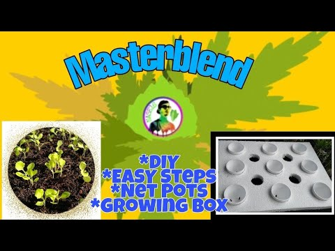 Hydroponics for beginners/detailed transplant, easy and convenient steps