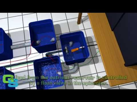 Greenstream hydroponics & deep water culture