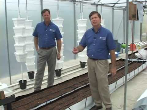 Soiless culture in hydroponics
