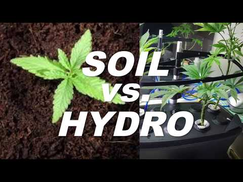 Soil vs hydro - what's the best way to grow weed? by cannabis frontier