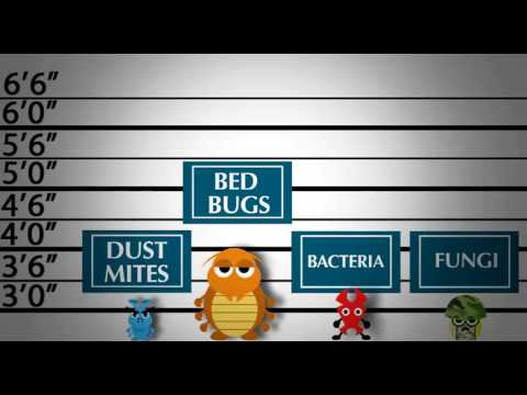 How to control dust mites in dubai ?