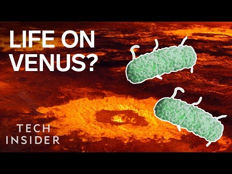 Forget mars — there could be alien life on venus