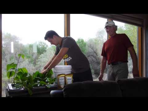 Incredible new hydroponic food growing system - sustainable garden, no electricity needed!