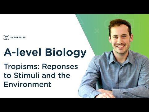 Plant responses: tropisms | a-level biology | ocr, aqa, edexcel