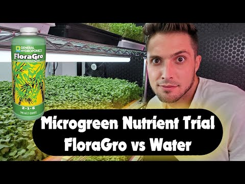Microgreen nutrients - floragro vs water experiment