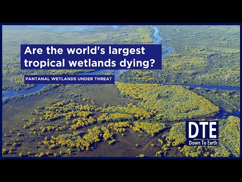 Is climate change killing pantanal, the world's largest tropical wetlands?
