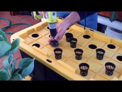 Hydroponics using compost tea (experiment)