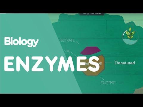 How enzymes denature   cells   biology   fuseschool