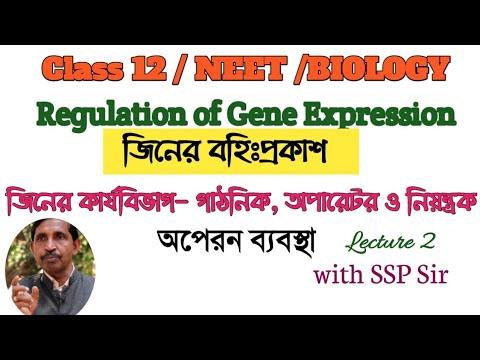 Regulation of gene expression operon concept / গাঠনিক, অপারেটর ও নিয়ন্ত্রক জিন / অপেরন ব্যবস্থা
