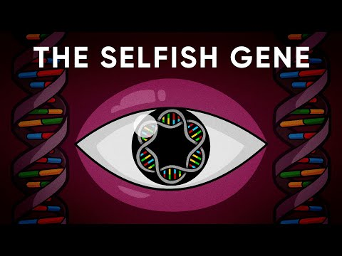 What is the gene's eye view of evolution?