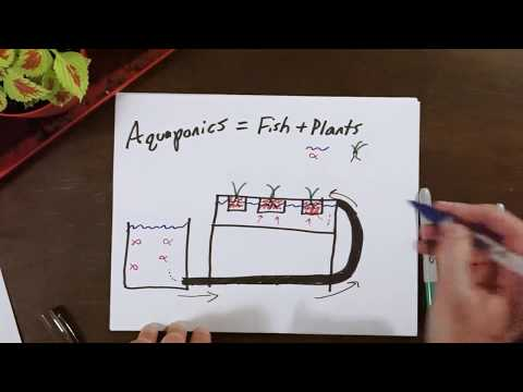 Understanding hydroponics and aquaponics