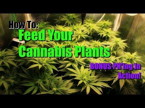 How to feed and ph your marijuana plants
