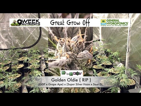 General hydro vs 9 week, cannabis nutrient side by side test - great grow off - start to finish