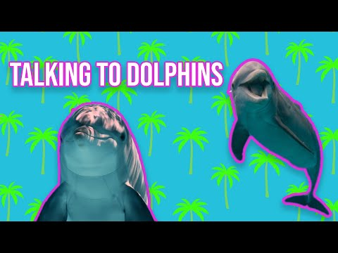 The nasa funded experiment to talk to dolphins