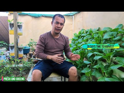 Hydroponics at home you need tosee/ sustainable farming hydroponics nutrients