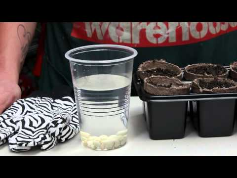 How to grow seeds faster - team member hints & tips   bunnings warehouse
