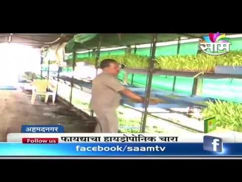 Beneficial hydroponics fodder