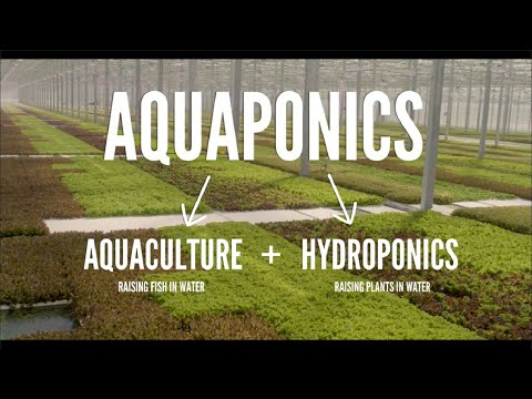 Aquaponics farming you need to see/sustainable farming greenhouse hydroponic sustainable agriculture