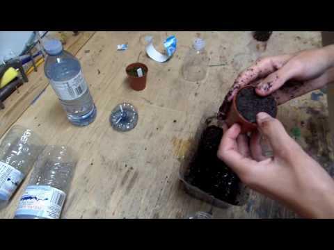 Venus fly trap and d. binata leaf cuttings