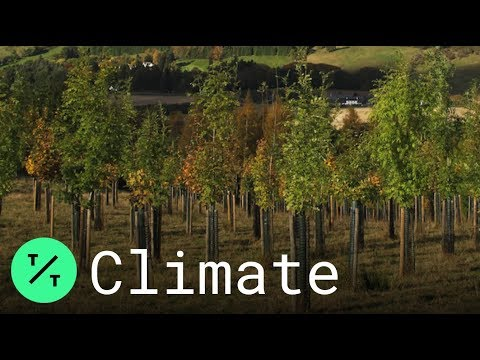 Scotland plants 22 million trees to fight climate change