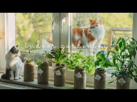 #43 grow vegetables 🥬 in glass jars - without soil | hydroponic gardening