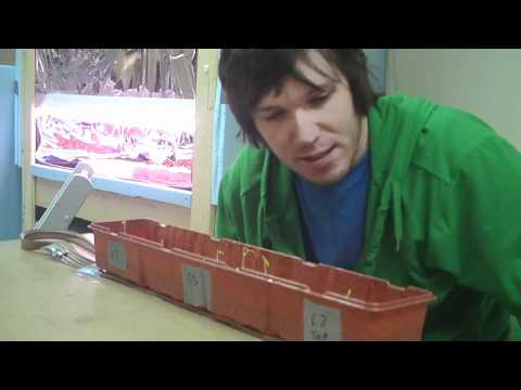How to hydroponics - s01e17 rockwool germinating seeds