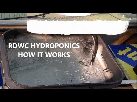 Rdwc hydroponics how it works