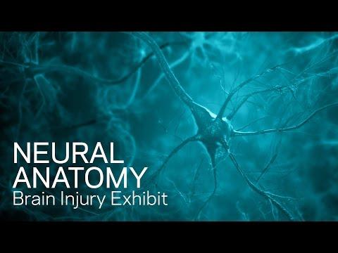 Neural anatomy and physiology - traumatic brain injury animation