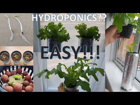 Basic hydroponic - 04: most efficient, easiest - best system - proven (just waiting for harvest) q&a