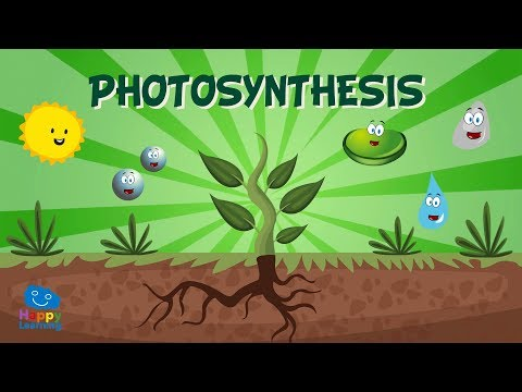 Photosynthesis   educational video for kids