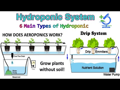 What is hydropoic system and how does it work/ 6 main types of hydroponics/ lecture 2