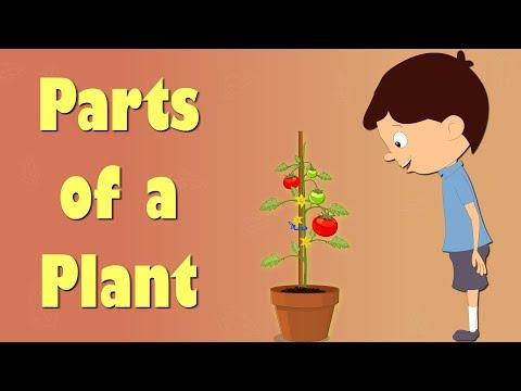 Parts of a plant   #aumsum #kids #science #education #children