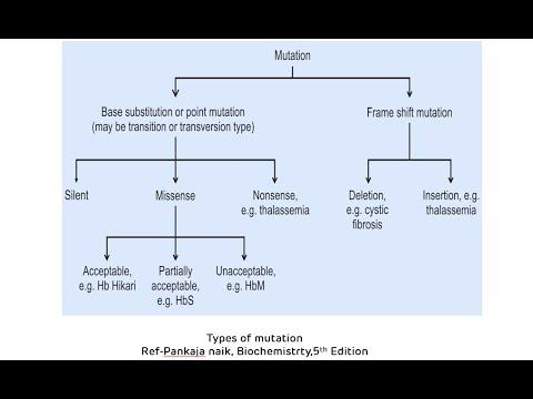 Types of mutations (point mutations and frameshift mutations)    mutations in genetics