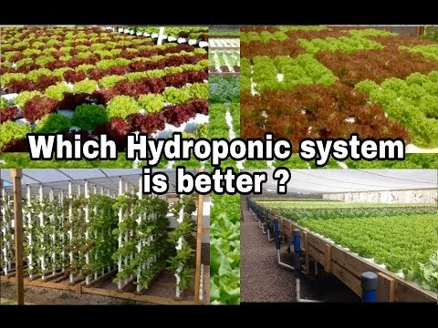 Hydroponics, which system is better ?