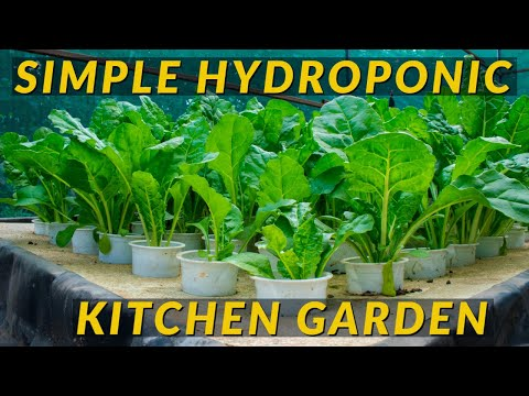 How to grow vegetables using cheap/affordable hydroponic system