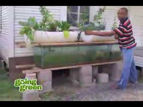 Aquaponics: what is aquaponics? using fish, plants and rocks to replicate earths natural cycles
