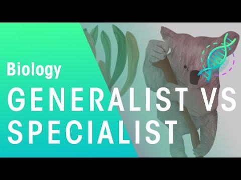Generalists vs specialists | ecology & environment | biology | fuseschool
